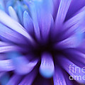 Captivation by Inspired Nature Photography Fine Art Photography