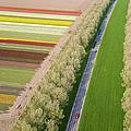 Car On Road Near Tulip Fields, Holland by Peter Adams