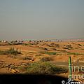 Caravan Of Camel In The Desert. by Luca Roveda