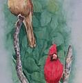 Cardinal Companions by Rhonda Leonard