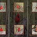 Cardinal Family by Ericamaxine Price