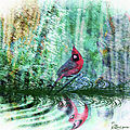 Cardinal - Featured In Comfortable Art-wildlife-and Nature Wildlife Groups by Ericamaxine Price