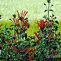 Cardinal Flowers by Lizi Beard-Ward