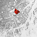 Cardinal In Winter by Ellen Henneke