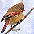 Cardinal On An Icy Twig - Digital Paint by Debbie Portwood