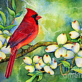 Cardinal On Dogwood by Hailey E Herrera