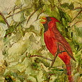 Cardinal Singing by Eldora Schober Larson