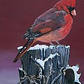 Cardinal Winter Songbird by Sharon Duguay