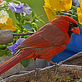 Cardinal With Pansies And Decorations by Debbie Portwood