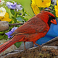 Cardinal With Pansies And Decorations Photoart by Debbie Portwood