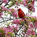 Cardinally Beautiful by Sonali Gangane
