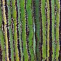 Cardon Cactus Texture. by Tom Janca