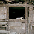 Carefree Kitten by Shaun Higson