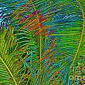 Caribbean Coconuts by Keri West
