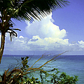Caribbean Day by Julie Palencia