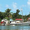 Caribbean - Docked Boats At Antigua by Susan Savad