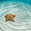 Caribbean Sea Star by Ethan Daniels