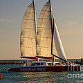 Caribbean Spirit Sails Miami by Rene Triay Photography