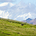 Caribou And Mount Mckinley by Gregory Everts