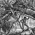 Caripuna Indians With Tapir, From The Amazon And Madeira Rivers, By Franz Keller, 1874 Engraving by American School