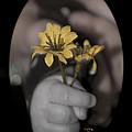 Carlee's Daisy by Trish Tritz