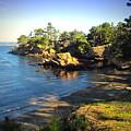 Carmel Meadows Beach At Point Lobos by Joyce Dickens