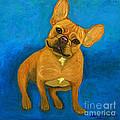 Carmen French Bulldog by Ania M Milo
