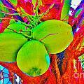 Carmen's Coconuts by Keri West