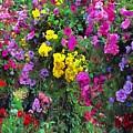 Carnival Flowers by Sergey Lukashin