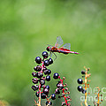 Carolina Saddlebags by Al Powell Photography USA