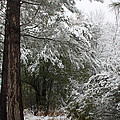 Carolina Snowfall by Carolyn Stagger Cokley
