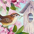 Carolina Wren In Springtime by Janet Zeh