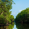 Caroni Swamp by Gareth Leigh