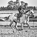 Carousel Horse 2 by Richard Marquardt