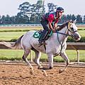 Carousel Horse 3 by Richard Marquardt
