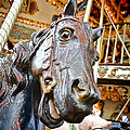 Carousel Horse Head by Olivier Le Queinec