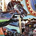 Carousel Horses by Betsy Cotton
