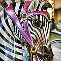 Carousel Zebra by Kenny Francis