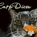 Carp Diem by Jacqueline  DiAnne Wasson