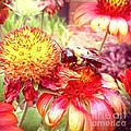 Carpenter Bee No. 4 by Jude Monteleone