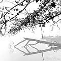 Carpenter Lake Morning by Wendell Thompson