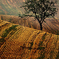 Carpet Fields Of Moravia by Jaroslaw Blaminsky