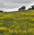 Carpet Of Malibu Creek Wildflowers by Kyle Hanson