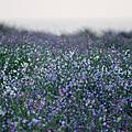 Carpinteria California Wildflowers by Kyle Hanson
