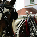 Carriage Horse - 6 by Linda Shafer