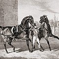 Carriage Horses For The King by French School