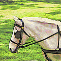 Carriage Pony by Alice Gipson