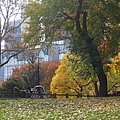 Carriage Ride Central Park In Autumn by Barbara McDevitt