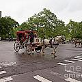 Carriage Ride In Central Park by Carol Ailles