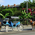 Carriage Tours New Orleans by Paul Wilford